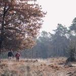 Fotograf Bottrop Paarshooting Babybauchshooting Wälder
